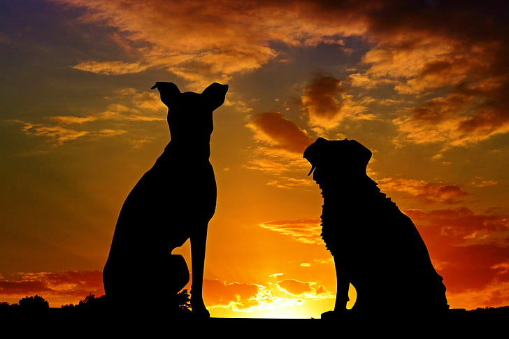 dogs, animals, sunset, friends, friendship, affection, silhouette