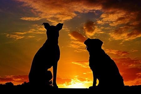 gossos, animals, posta de sol, amics, l'amistat, afecte, silueta