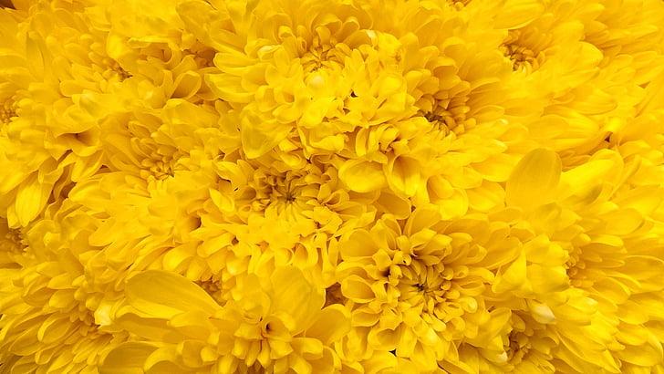 māte, mamma, Mama, 10, ziedi, dzeltena, daba