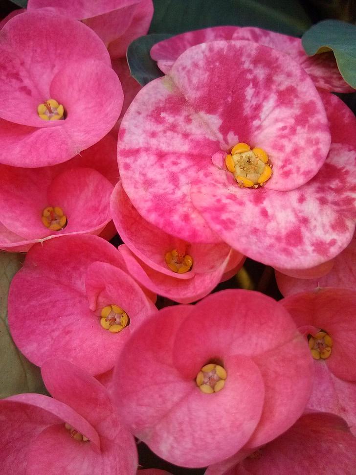 flores rojas, bonita, extraño