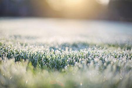 Frost på gress, tidlig morgen, Frost, morgen, Bokeh i gresset, gresset, natur