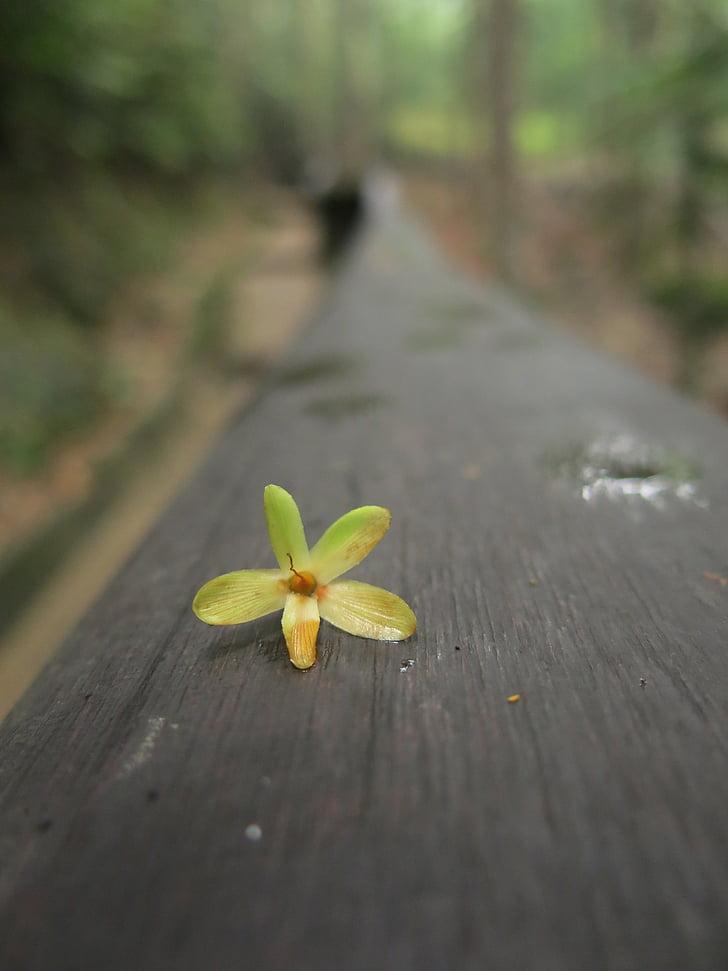 цвете, естествени, природата, флорални, жълто, парк
