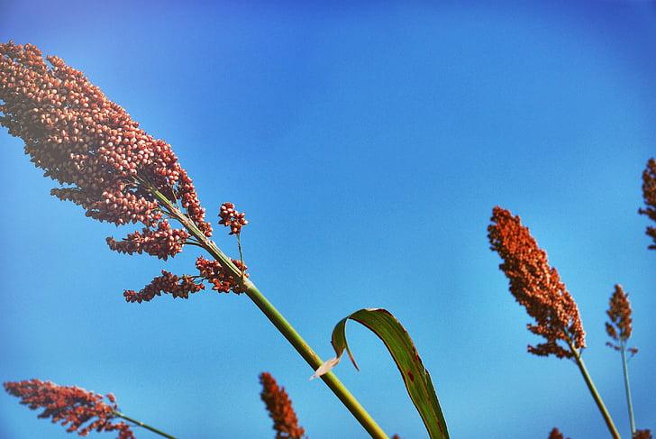 plante, fleur, l'Aloe ferox, aloès du Cap, aloès amer, aloès Red, Touchez l'aloe