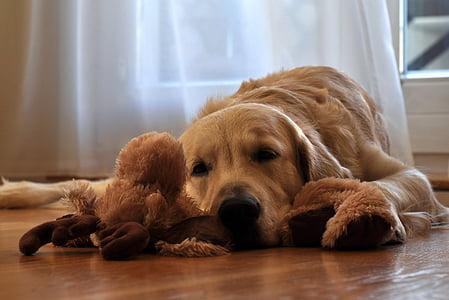adorable, animal, canine, cute, dog, pet