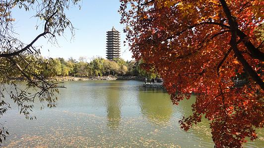 Xina, Turisme, el paisatge, tardor, vermell, Universitat de Pequín, weiminghu