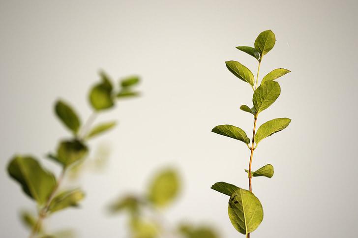 zelené listy, listy, kmeňových, prírodné, Zelená, nožnice