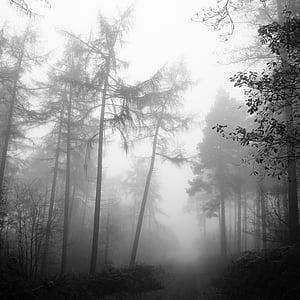 forest, fog, nature, tree, mystery, mist, autumn