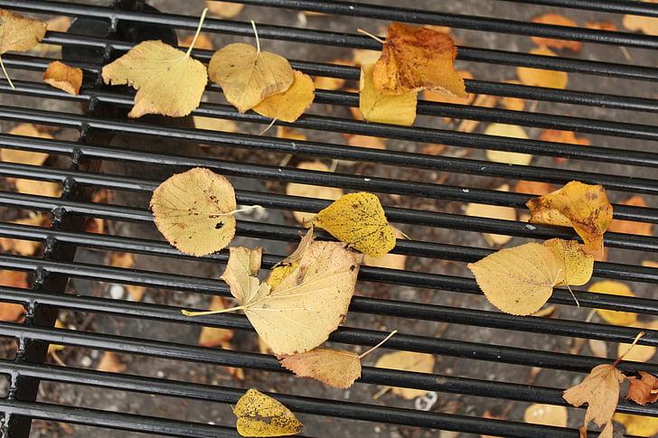 fulles, tardor, groc, fulles de tardor, temporada, octubre, or