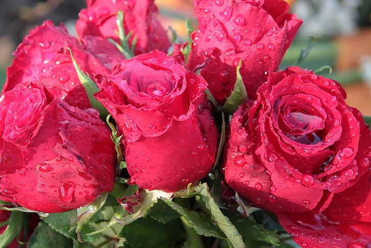 ramo de rosas, Rosas, ramo de la, flores, flor color de rosa, llena con agua de lluvia, gota de agua