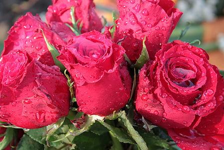 kimp Amarylistega, roosid, kimp, lilled, roosa õitega, vihmavee täis, vihmapiisk