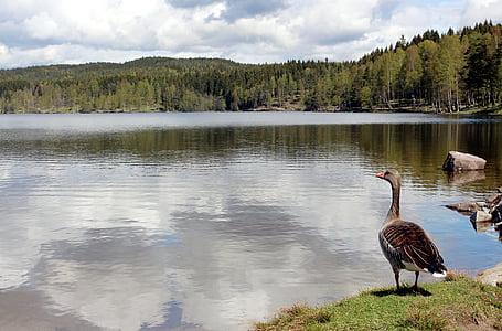 Oslo, Nordmarka, Sognsvann, VisitOslo, resten, Romance, Norge