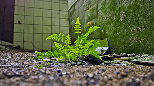 lost places, fern, fouling, nature, old, leave, ruin