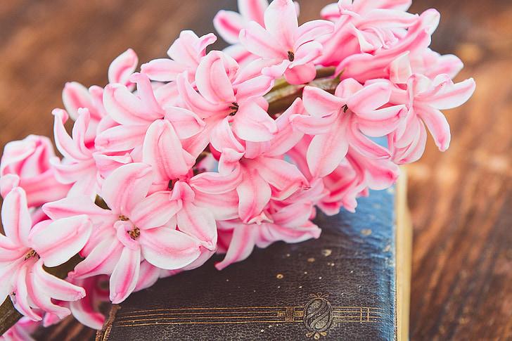 eceng gondok, bunga, bunga, merah muda, wangi, wangi bunga, bunga musim semi