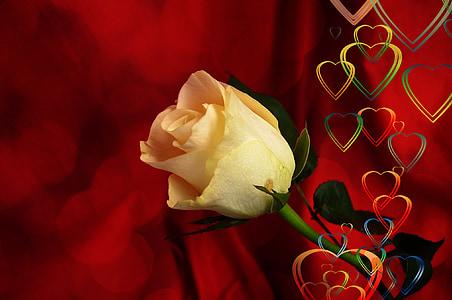 ruža, srce, ljubav, Sreća, Sažetak, odnos, Hvala ti