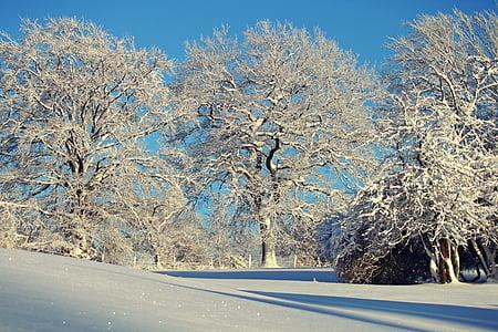 winter, wintry, snow, snowy, trees, winter magic, frost