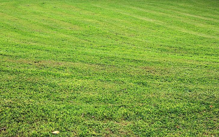 χόρτο φόντο, χλόη, φόντο, πράσινο γρασίδι, φύλλα, μικροσκοπικά φύλλα, φύλλα χλόης