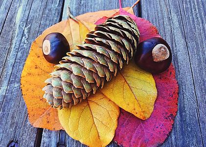 πτώση, το φθινόπωρο, σεζόν, φύλλο, φύλλα, πολύχρωμο, πτώση υπόβαθρο