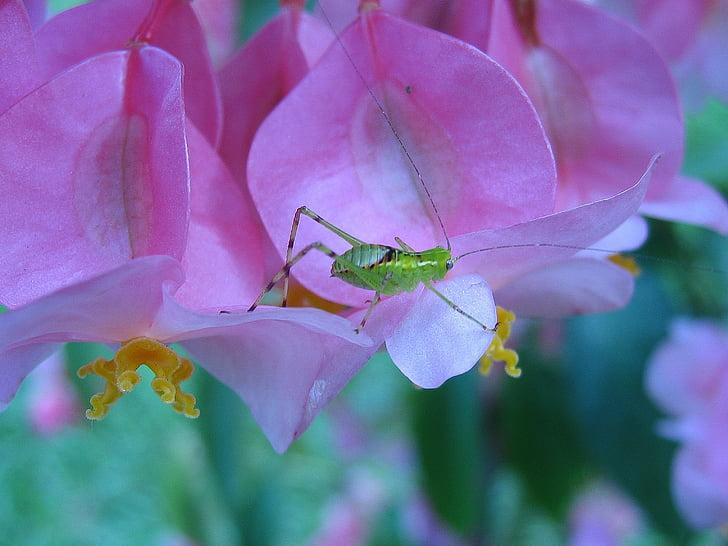 бъг, насекоми, микро, едно животно, животните теми, животните дивата природа, животни в дивата природа