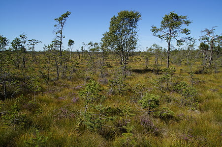 Moor, lyngheier, gress, våtmarksområde, naturvern, naturreservat, natur