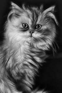 cat, kitten, domestic cat, persian cat