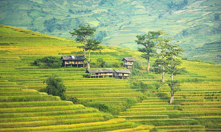 Гольф-клуб, деревня, Сельское хозяйство, каньоны, вьетнамский, Таиланд, почвы
