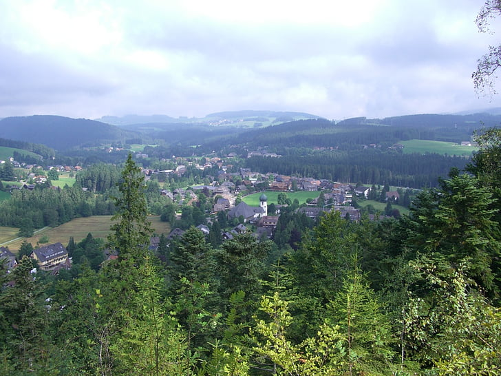 hinterzarten, black forest, outlook, firs, forests, mountains, nature