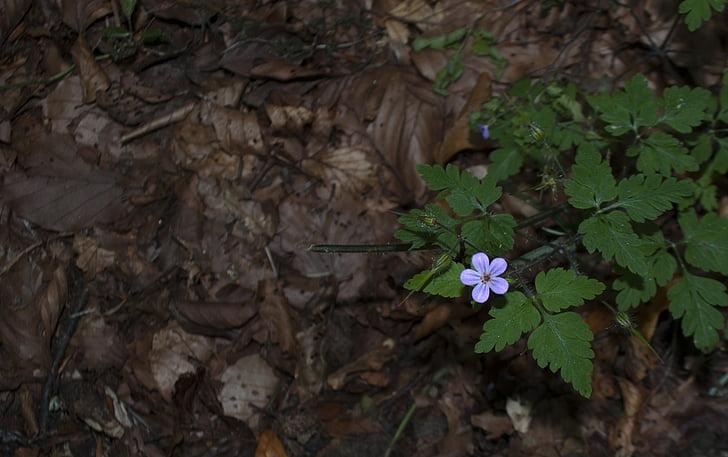 metsa, lill, loodus, väike, väike, looduslik, Õues