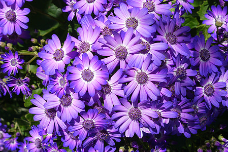 flors, flors, temporada, primavera, flors de primavera, natura, planta