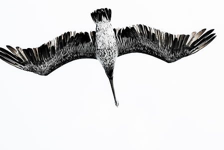 sea, bird, seagull, studio shot, one animal, animal wildlife, no people