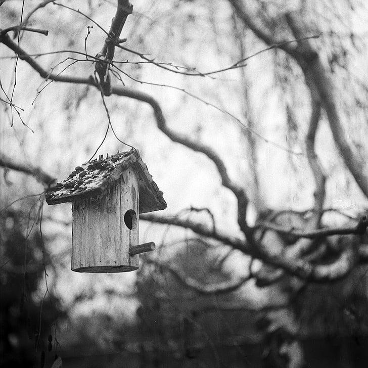 Bird house, musta ja valkoinen, yksivärinen, rauhallinen