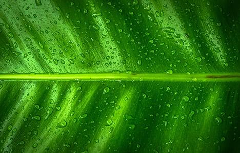 φύλλο, φύση, ξύλο, πράσινο, τα φύλλα, hwalyeob, Περίληψη