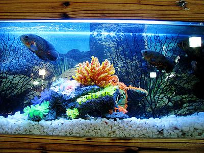 Aquari, Tancs de peixos, peix, l'aigua