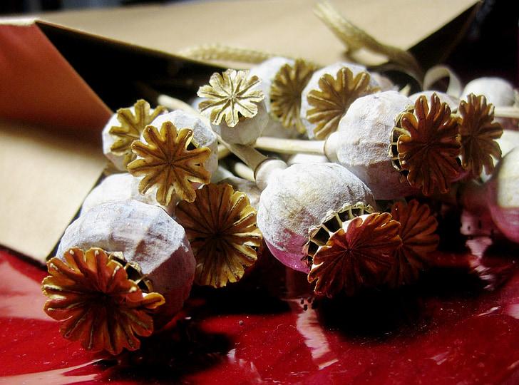 moonid, seedpods, kuiv, pleegitatud, punane tsellofaani, pruun paber paketi