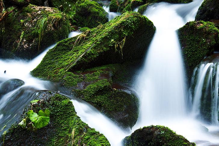 Creek, Falls, flöde, flödar, skogen, grön, landskap