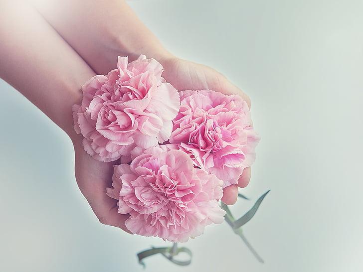 claus d'espècia, flors, Rosa, Clavell Rosa, tres, schnittblume, mans
