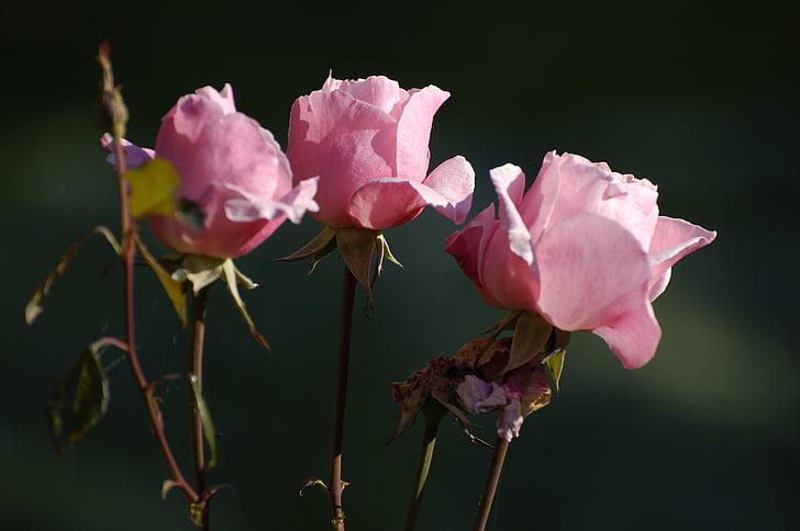 color de rosa, flor, la ceremonia de, ramo de la, ramo de flores, verano, naturaleza