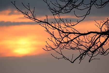 pôr do sol, filial, arrebol, céu, estética, árvore, abendstimmung