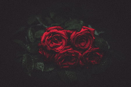 rožės, gėlės, naktį, Romantika, puokštė, gėlė, raudona