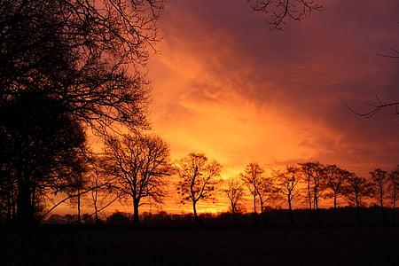 Alba, cel, arbres, cels, morgenstimmung, natura, cel daurat
