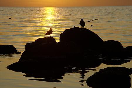 ชายฝั่ง, ทะเล, นกนางนวล, นก, ชายหาด, พระอาทิตย์ตก, น้ำ
