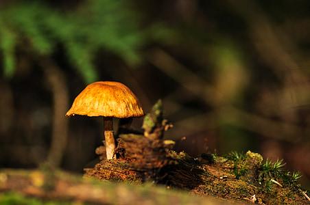 грибы, лес, Лес Пол, Осень, Осенний лес, листья, Природа