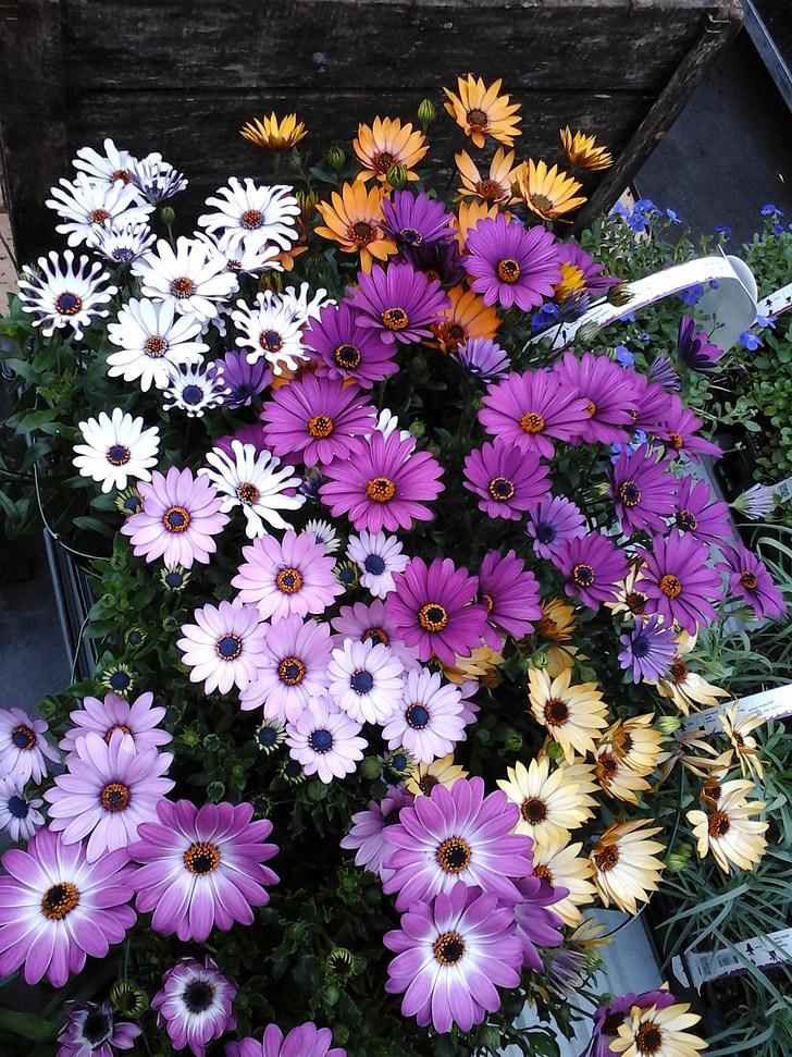 flor, jardí, flors d'estiu