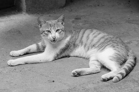 猫, キティ, 小さな新鮮な, 国内の猫, 動物, ペット, ネコ科の動物