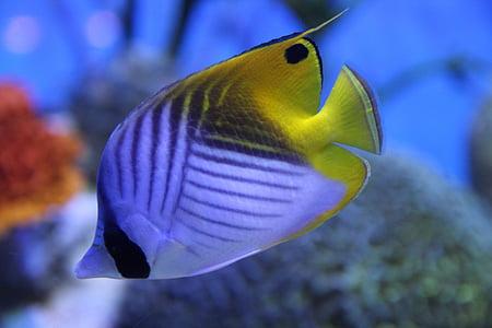 peix, criatures marines, vida marina, Mar, peixos, Aquari
