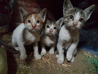 kittens, cats, felines, sitting, domestic, cute, young
