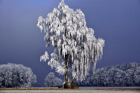 drevo, pozimi, zimski, pozimi dreves, narave, sneg, gozd