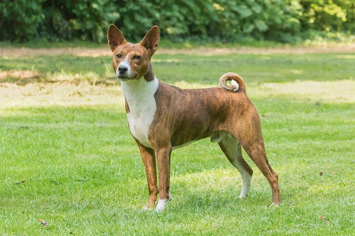 σκύλος, ζώο, κατοικίδιο ζώο, σκυλιά, γαυγίζω, κατοικίδια ζώα, χλόη