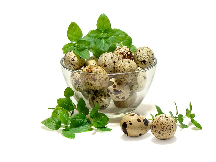 eggs, quail, mint, kitchen, food, freshness, leaf