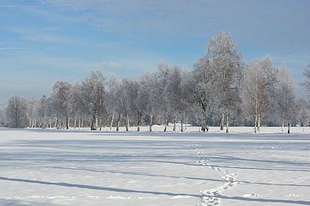 landscape, winter, snow, wintry, white, snowy, snow magic