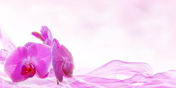 benestar, bellesa, flor, déco, planta, massatge, orquídia